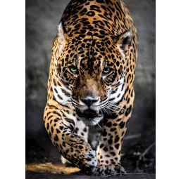 Puzzles  Puzzle 1000 Pèices Walk of the jaguar